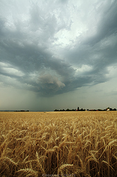 storm_cloud_over_the_wheats_by_maximecourty_d3knmlr